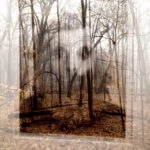 In the Woods by Emily Temte, Luther College graduate