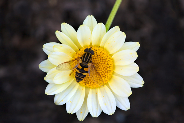 pollination web